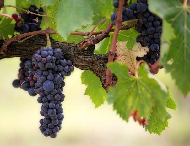 welcome2lucca-montecarlo-e-i-suoi-vini