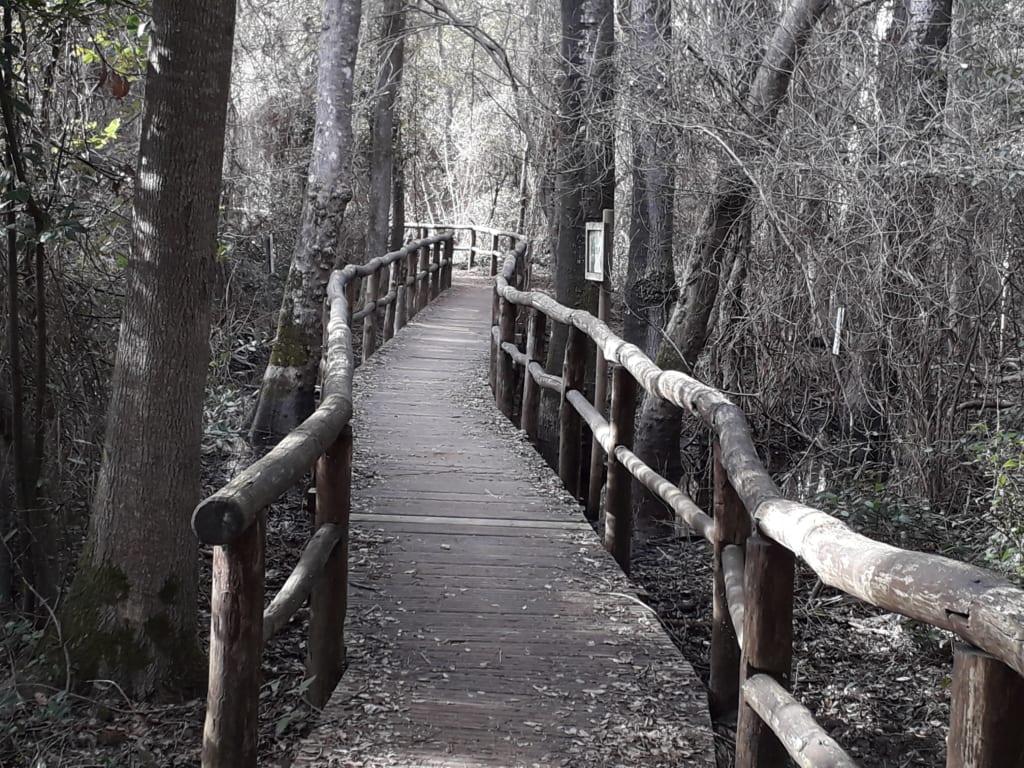 Sentiero su una lama