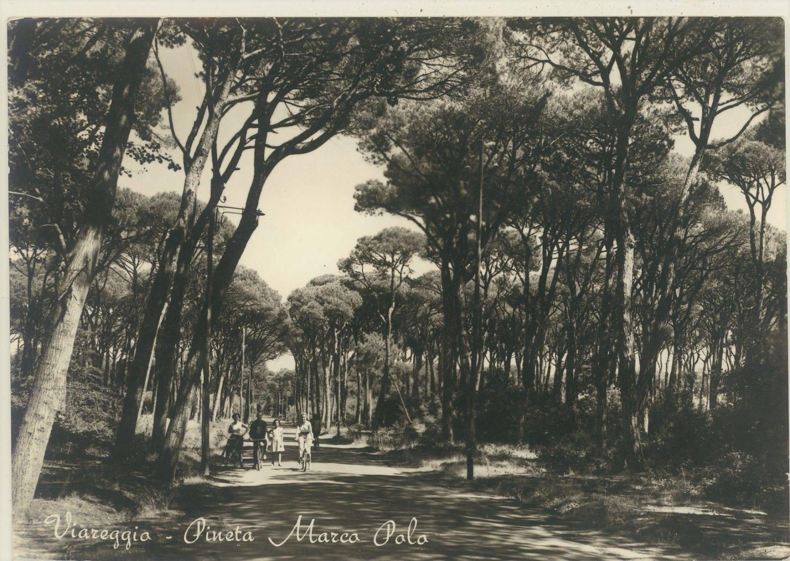 Pineta del Marco Polo negli anni '50