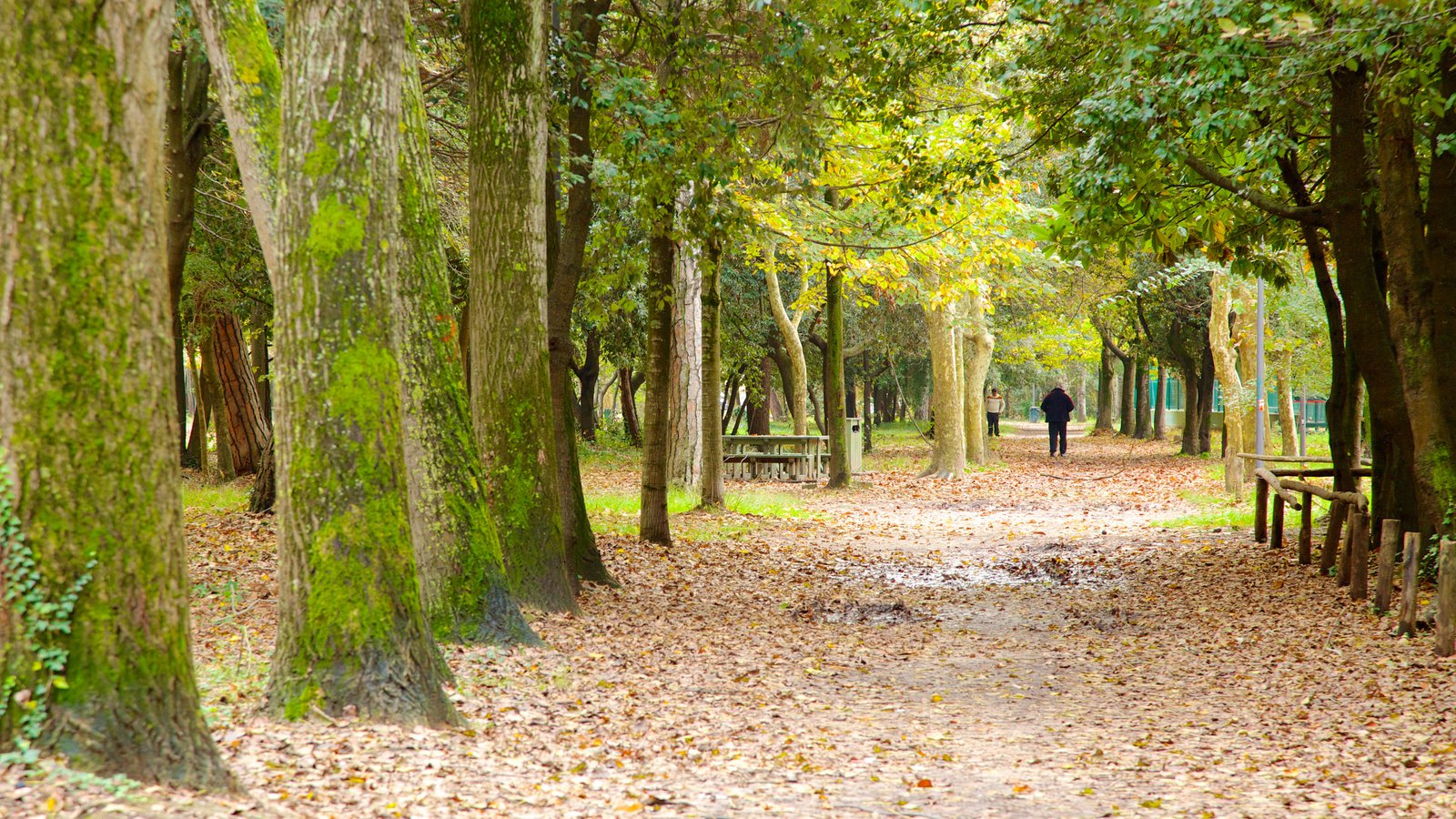 Un sentiero in autunno